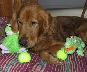 Bad Dog Training Frederick Md